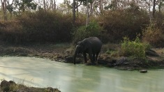 Elephant from my mobile